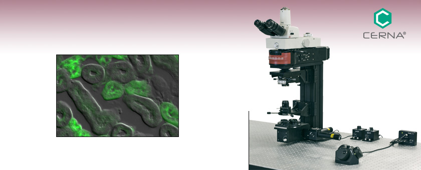 Cerna® Microscope for Epi-Fluorescence and DIC in the Visible and NIR