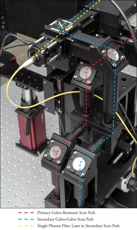 Bergamo® II Series Multiphoton Microscopes